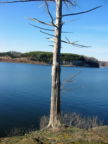 A lone tree along the Green River Lake, Kentucky