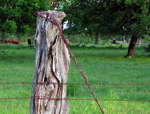 Barbed wire fence, Texas farm scene