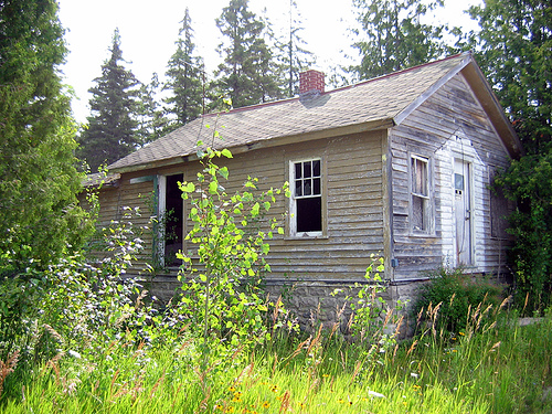 Very old, overgrown homeplace