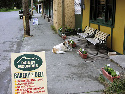 Patience as dog waits on owner, outside smalltown cafe