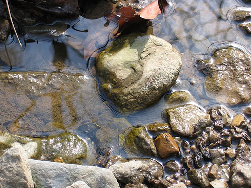 Kentucky creek, assortment of rocks