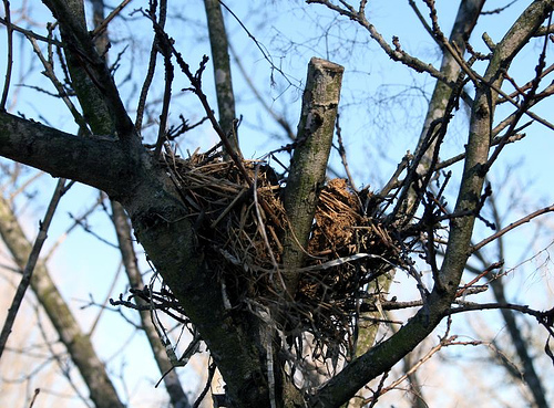 birds nest earth healing daily reflections